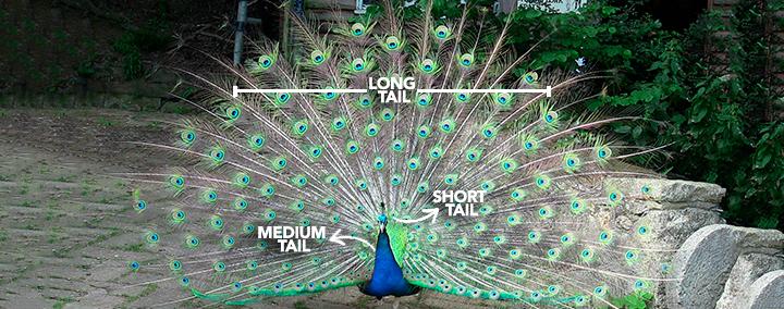 La cola del pavo real ilustra lo que serían las long tail keywords comparadas con las short tail (cresta) y las medium tails (cuerpo).